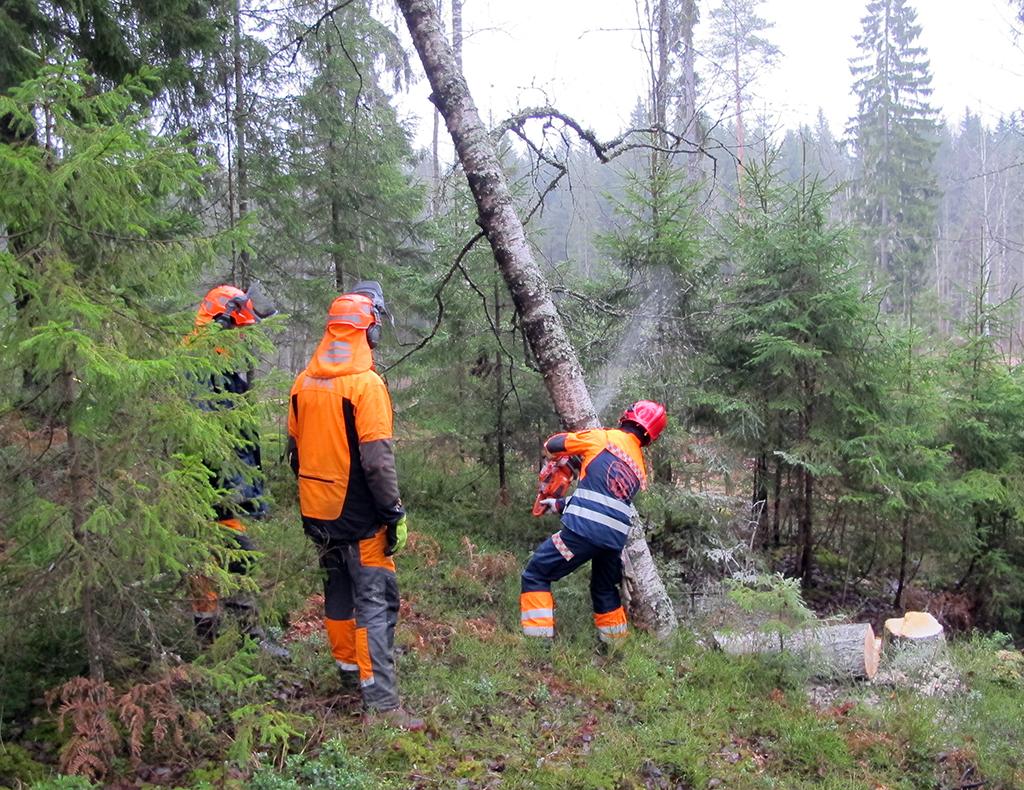 Länsi-Uudenmaan pelastuslaitoksen paloesimiehet harjoittelivat myrskytuhojen raivausta.