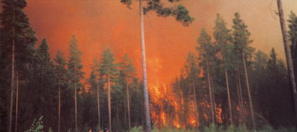 Metsäpalot Suomessa