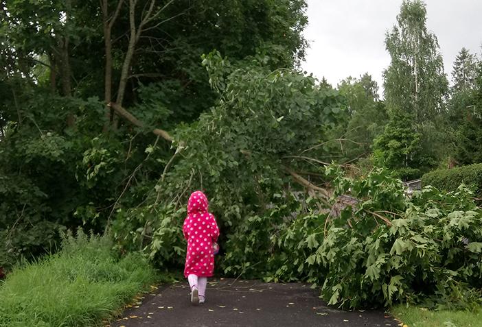 Syöksyvirtaukset kaatoivat puita joka puolella.