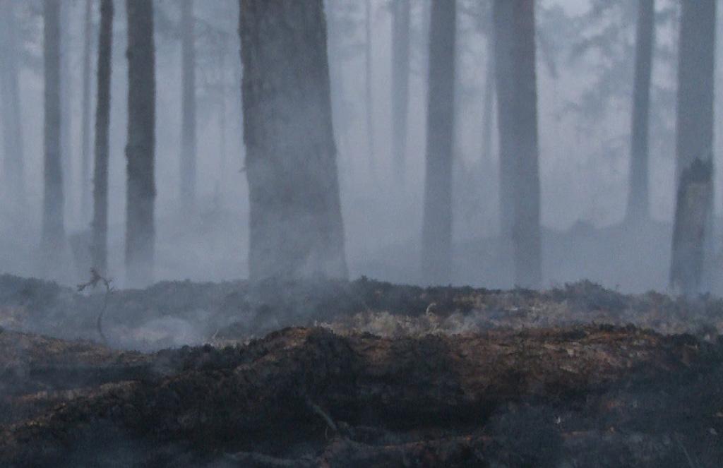 Sammutettua maastoa massiivisen metsäpalon jäljiltä Ruotsin Västmanlandissa vuonna 2014.